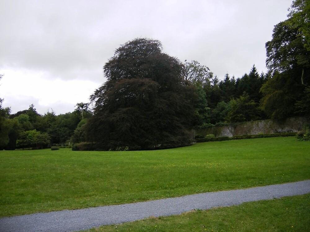Coole Park2 by Patrick Ronan