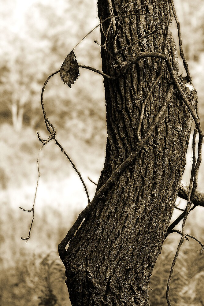 Love Tree by Brandy  Bartley