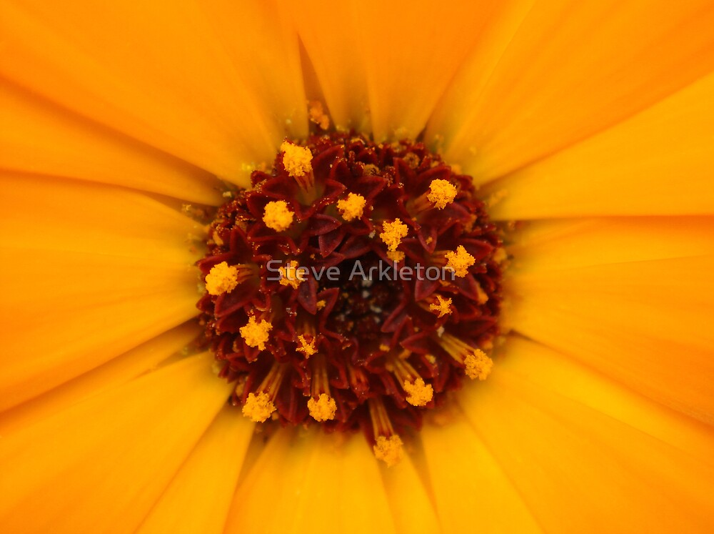 pollen by Steve Arkleton