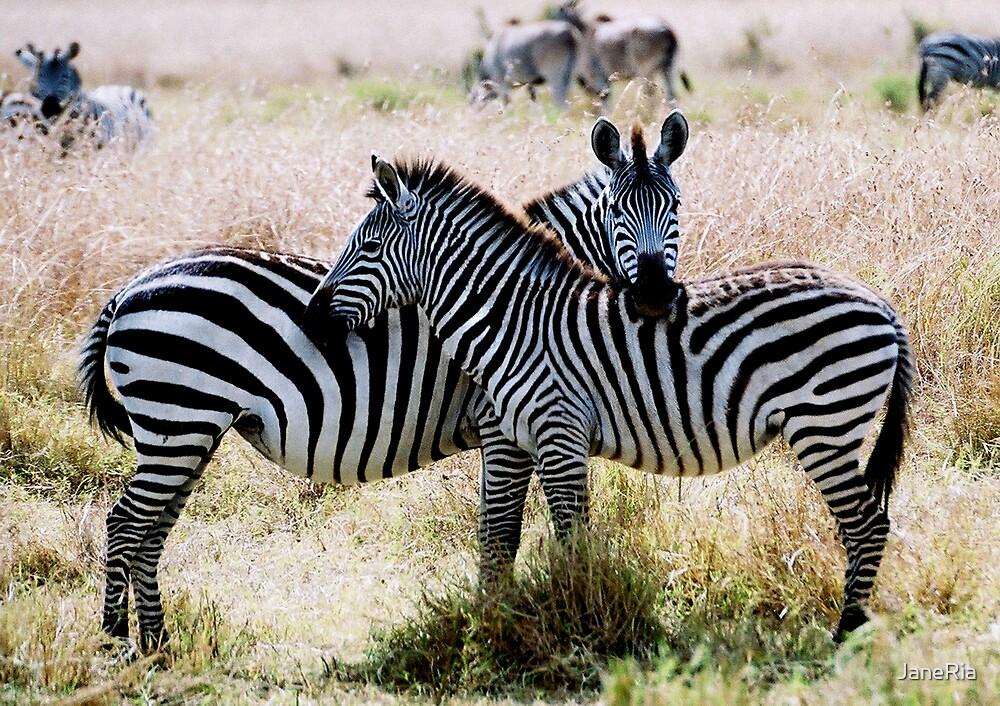 Zebra Crossing by JaneRia