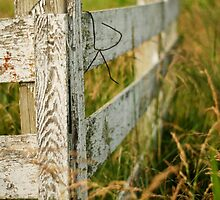 Forgotten Fence by mikekurtzphoto