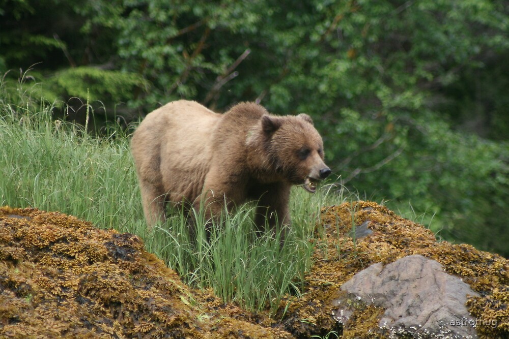 Grizzly Bear by astrothug