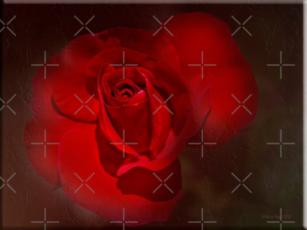 Red Rose by Elaine Teague