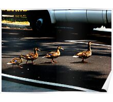 Duck Xing. Poster