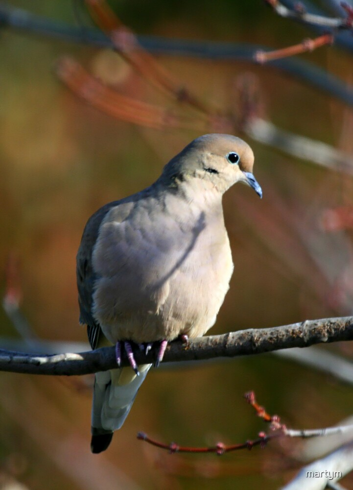 dove3 by martym