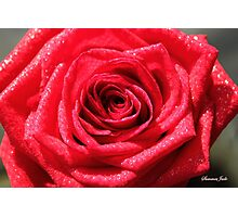 Dressed for a Party ~ Glittering Rose Photographic Print
