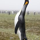 "King Penguin ~ ""The Trumpeter"" by Robert Elliott"