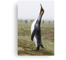 "King Penguin ~ ""The Trumpeter"" Canvas Print"