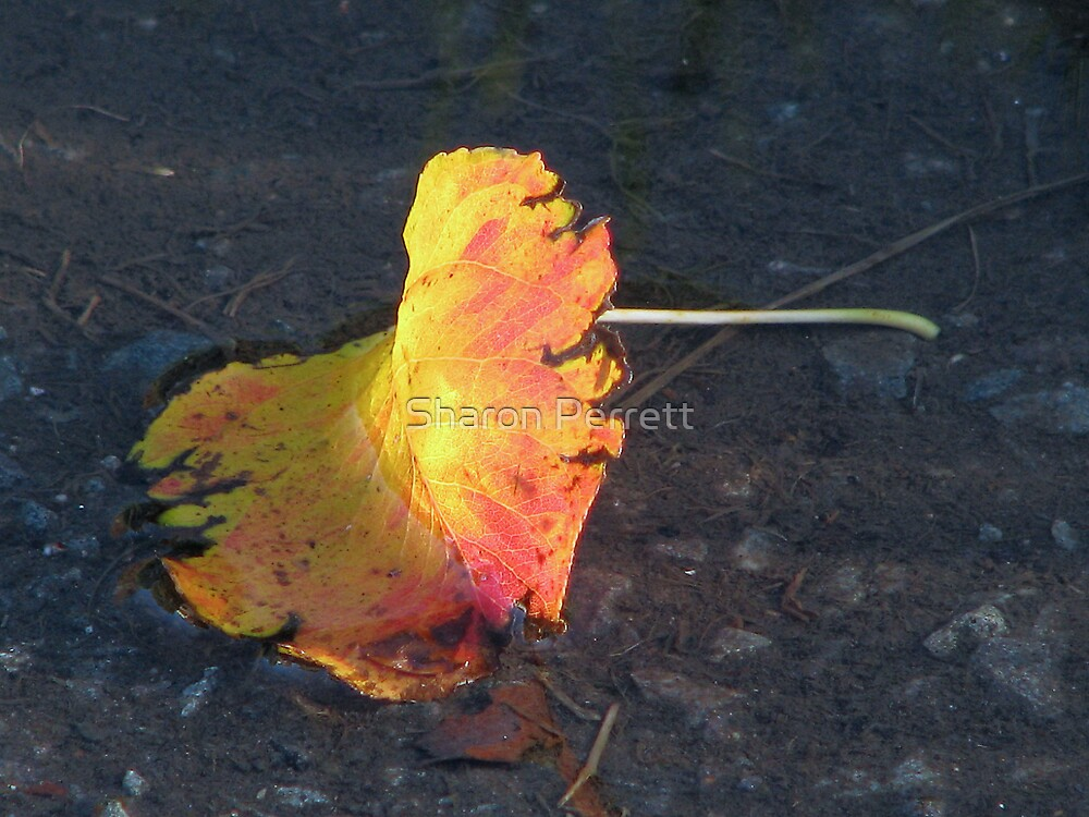 Leaf Litter by Sharon Perrett