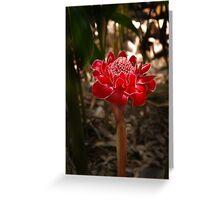 Red Torch - Etlingera Elatior Greeting Card