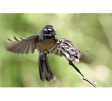Grey Fantail ~ It's Simple Kid  Photographic Print
