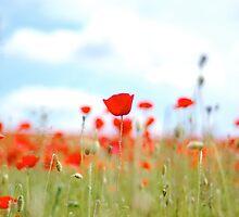 The summer sun shone round me... by Angela Ward-Brown