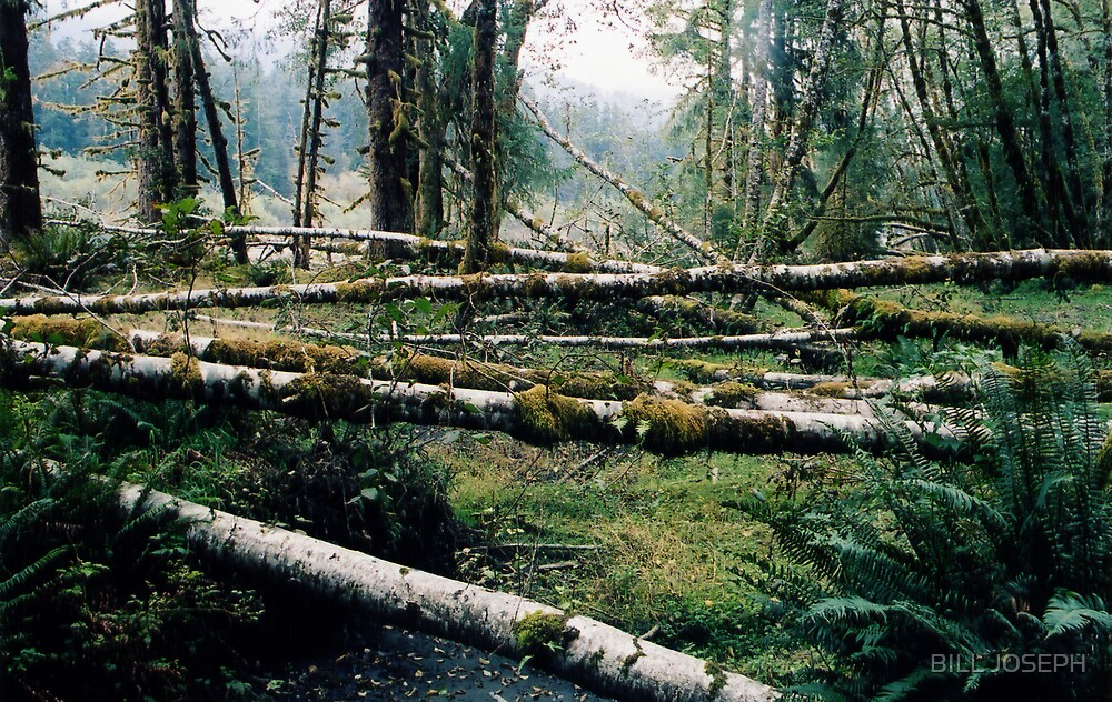 HOH RAIN FOREST by BILL JOSEPH
