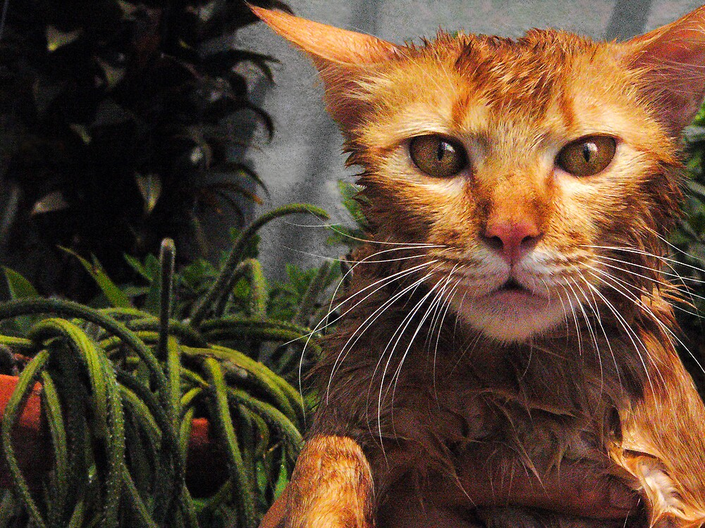 william the (wet) cat by pjwalczak