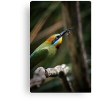 Rainbow Bee Eater Canvas Print