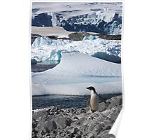 "Adelie Penguin  ~  ""and this is my backyard"" Poster"