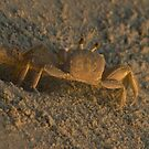 Ghost Crab by Arthur &quot;Butch&quot; Petty