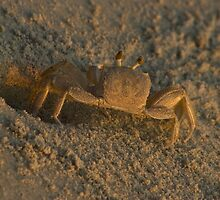 "Ghost Crab by Arthur ""Butch"" Petty"