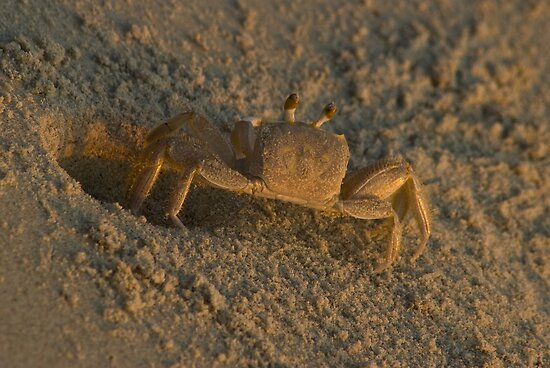 "Ghost Crab by Arthur ""Butch"" Petty"