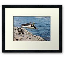 "Adelie Penguin ~ ""I Can Fly"" Framed Print"
