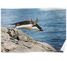 "Adelie Penguin ~ ""I Can Fly"" Poster"