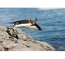 "Adelie Penguin ~ ""I Can Fly"" Photographic Print"
