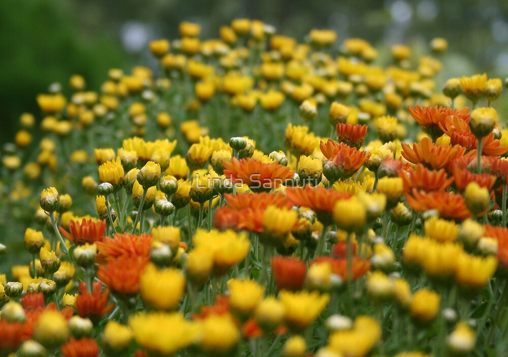 meadows by Linda Sannuti