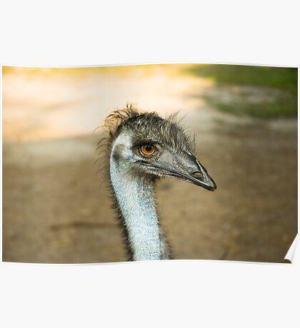 Emu Eyes Poster