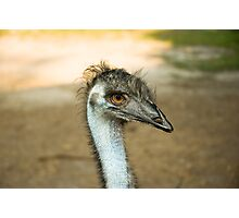 Emu Eyes Photographic Print