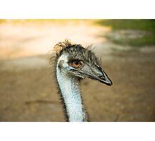 Emu Eyes Photographic Print