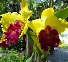 Yellow Orchid by Talen