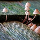 Mini Shrooms by Mike Stone