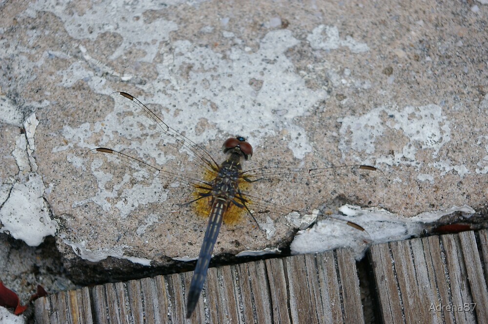 Dragonfly by Adrena87
