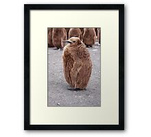 "King Penguin chick ~ ""Mirror Mirror on the wall, who's the........"" Framed Print"