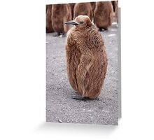 "King Penguin chick ~ ""Mirror Mirror on the wall, who's the........"" Greeting Card"