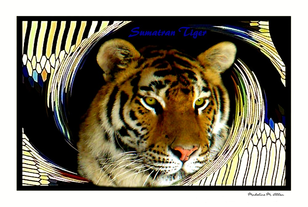 Sumatran Tiger by Madeline M  Allen