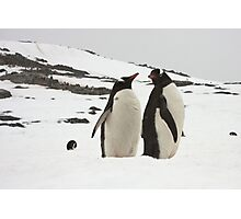 "Gentoo Penguins ~ ""Life in the Freezer"" Photographic Print"