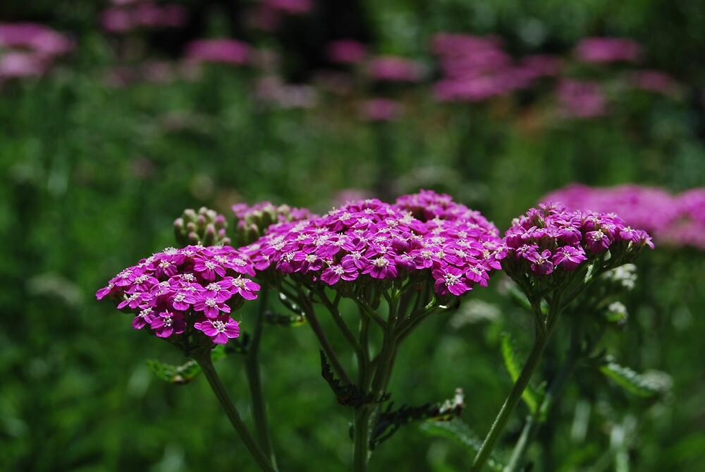 Purple by Princessbren2006
