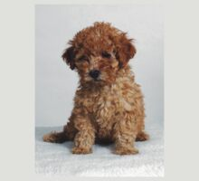 Poodle pup by ronibgood