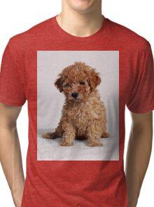 Poodle pup Tri-blend T-Shirt