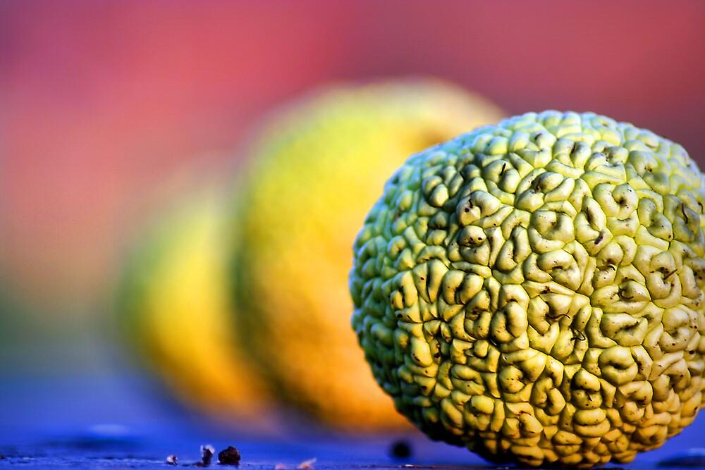 forbidden fruits by rutger