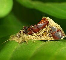 Fluffy - Moth close up by NicoleBPhotos