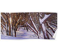 Howqua Snowgums, Mount Buller Poster