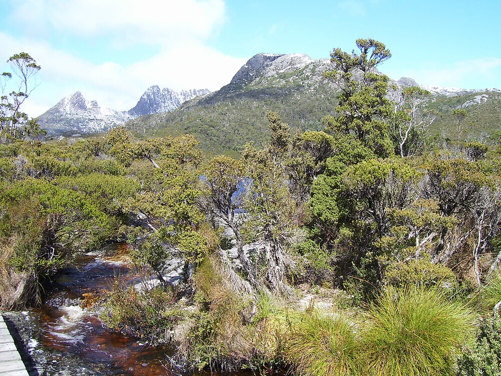 Cradle Mountain, yet again, with Marion's Lookout peak mid picture by gaylene