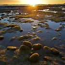 Wynyard Beach Sunrise - Tasmania by Anthony Davey