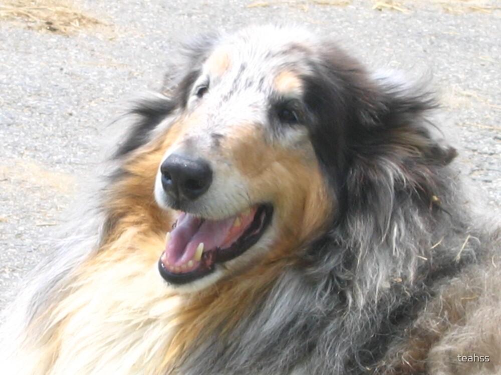 Very friendly dog by teahss