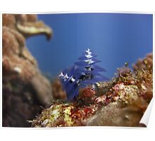 Christmas Tree Worm Poster