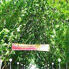 Hyde Park's Natural Corridor by Jaroadie