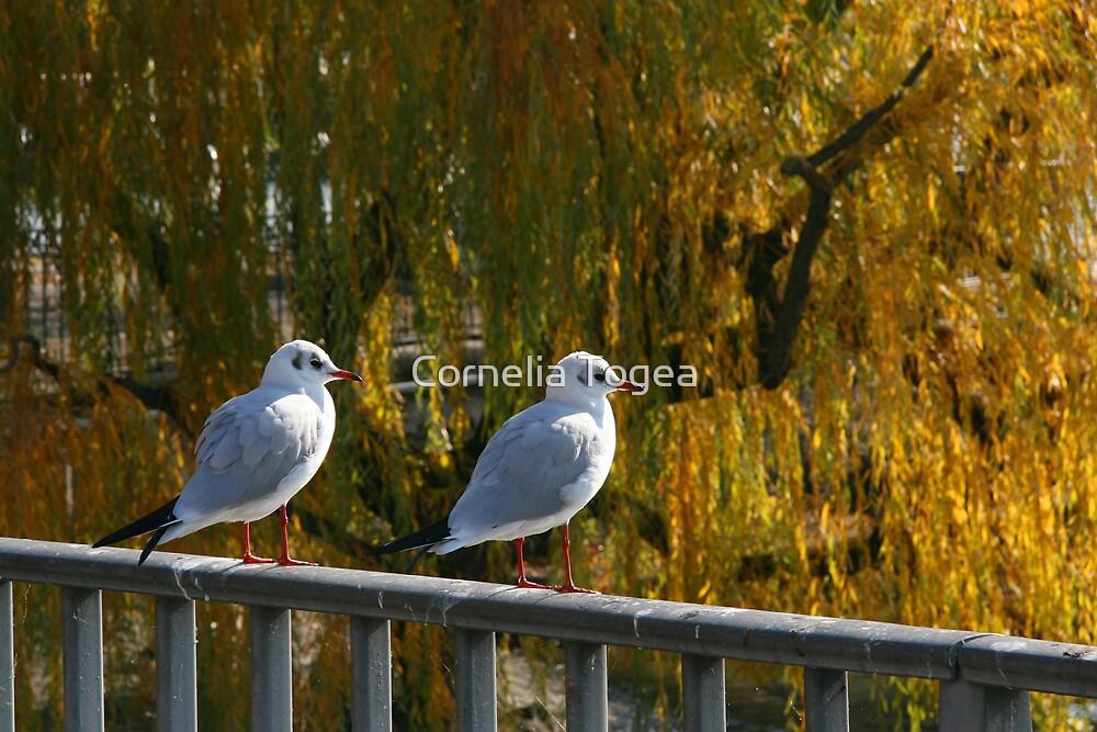 gulls sitting by Cornelia Togea