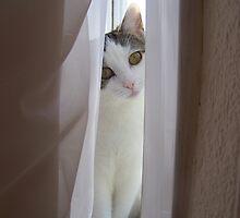 peek-a-boo by jayPjay